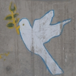 cropped-afghan-street-dove